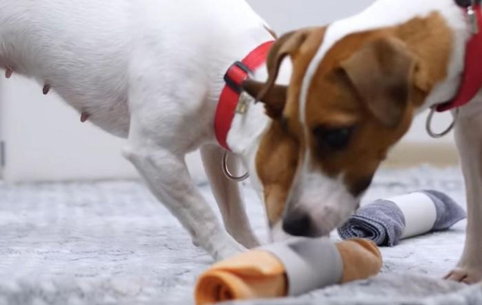 Собакам будут интересны такие игрушки
